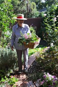 Senior gardener wearing suitable protective clothing